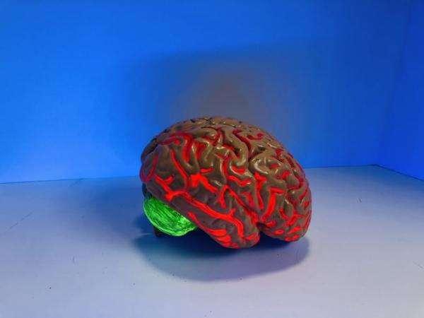 creier, foto unplash