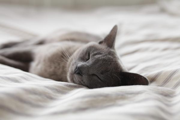 Somn, foto Unsplash/ autor: Alexander Possingham