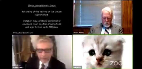 Un avocat a intrat într-o conferință cu un filtru de pisică. Captură foto Twitter