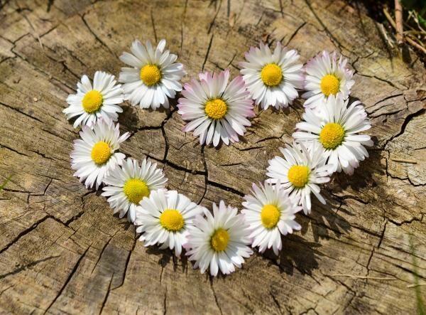 Dragobetele, sursa pixabay/ autor congerdesign