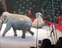 Doi elefanţi s-au comportat agresiv în timpul unui spectacol de circ în Kazan , captura foto Youtube, sursa Crime report from Russia