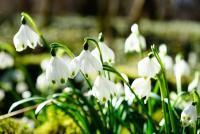 Urări de 1 martie, sursa pixabay/ autor Hans Braxmeier