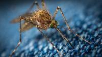 6 plante care te scapă de țânțari. Unsplash.com/ autor Егор Камелев