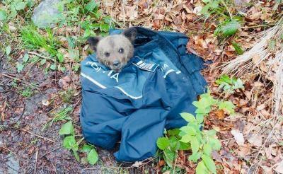 Un pui de urs din zona Porumbacu de Sus a fost salvat de un echipaj de poliție. FOTO Facebook/ Politia Română