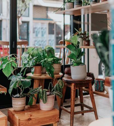 Plante, foto Unsplash/ sursa Ceyda Çiftci