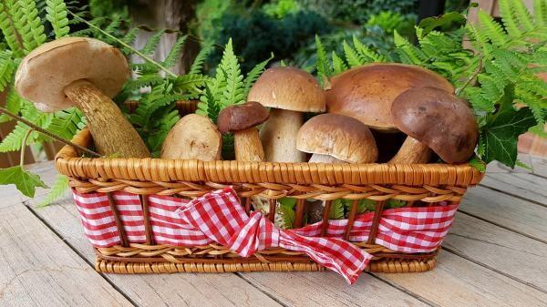 Beneficiile ciupercilor, sursa pixabay/ autor Anja????#helpinghands #solidarity#stays healthy