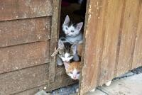 Pisici, sursa pixabay/ autor Philipp T