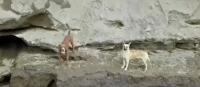 Spay și Spike, captura foto Youtube/ sursa Noticias Telemundo