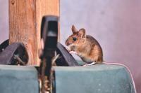Deţinuţi evacuaţi din cauza unei invazii de şoareci, foto pixabay/ sursa Capri23auto