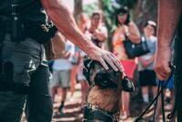Câine polițist, sursa unsplash/ autor Jason Jarrach