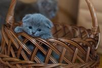 Horoscop pisici, sursa pixabay/ autor Pexels