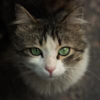 Pisici care au devenit faimoase. 5 povești ale unor feline ieșite din comun. Unsplash.com/ autor Rafael Ishkhanyan