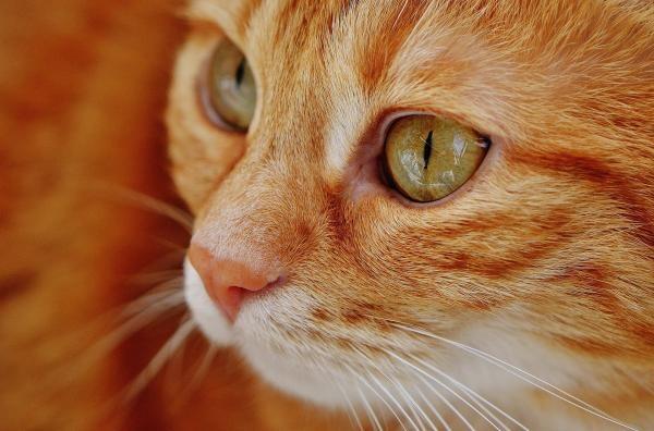 Pisici, sursa pixabay/ autor Hier und jetzt endet leider meine Reise auf Pixabay aber