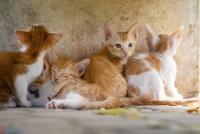 Un bărbat a fost condamnat la închisoare după ce a înjunghiat 16 pisici, sursa pixabay
