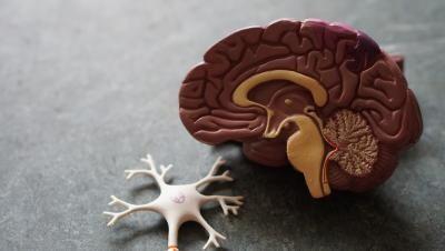 Sănătatea creierului, foto Unsplash/ Robina Weermeijer