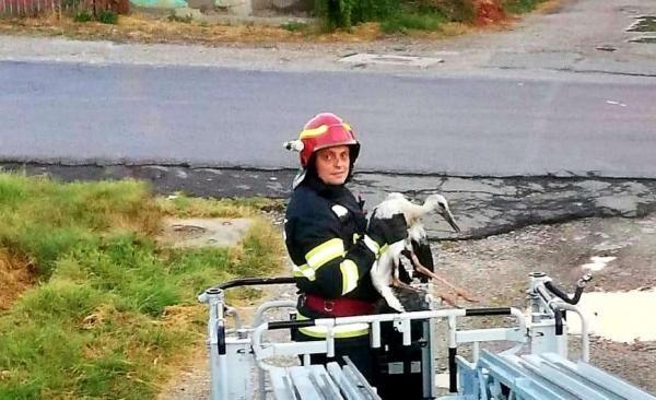 Un pui de barză a fost salvat de pompieri, după ce trântit la pământ de vijelie, foto ISU Giurgiu