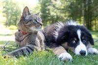 Pisici și câini, foto Unsplash/ Andrew S